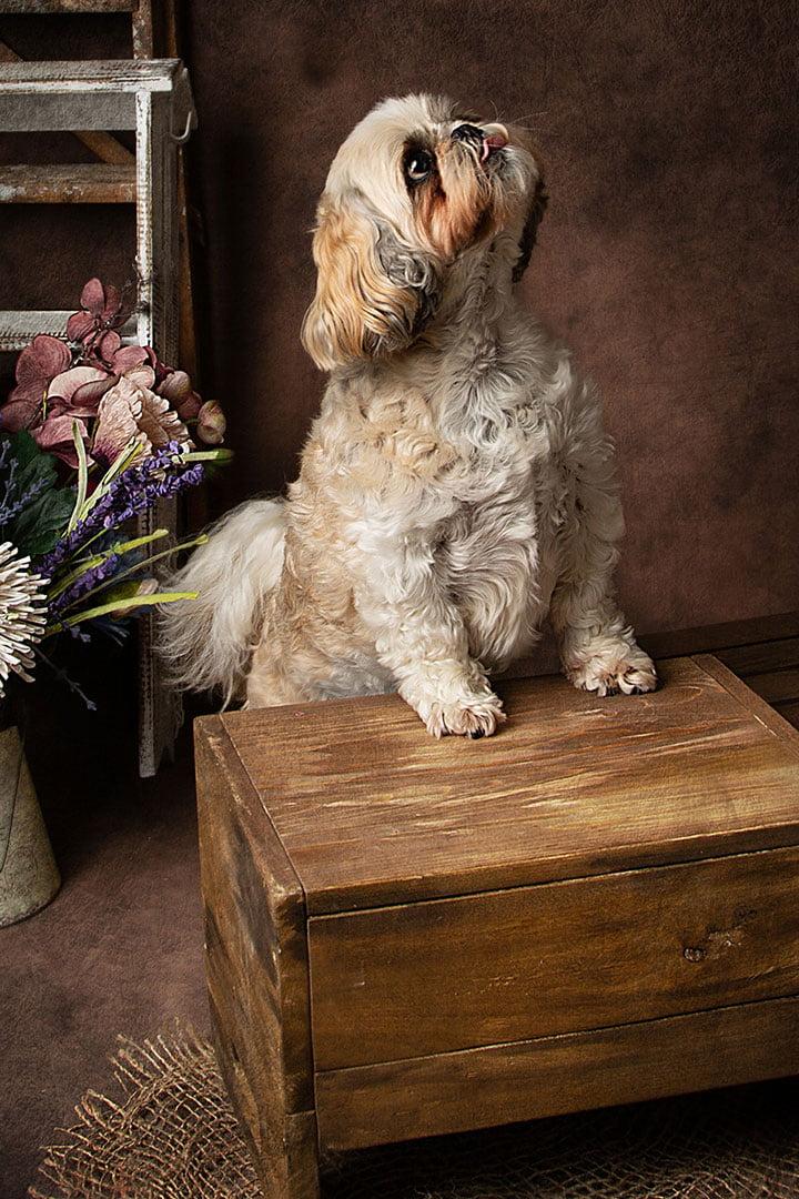 dog photos in Bradford