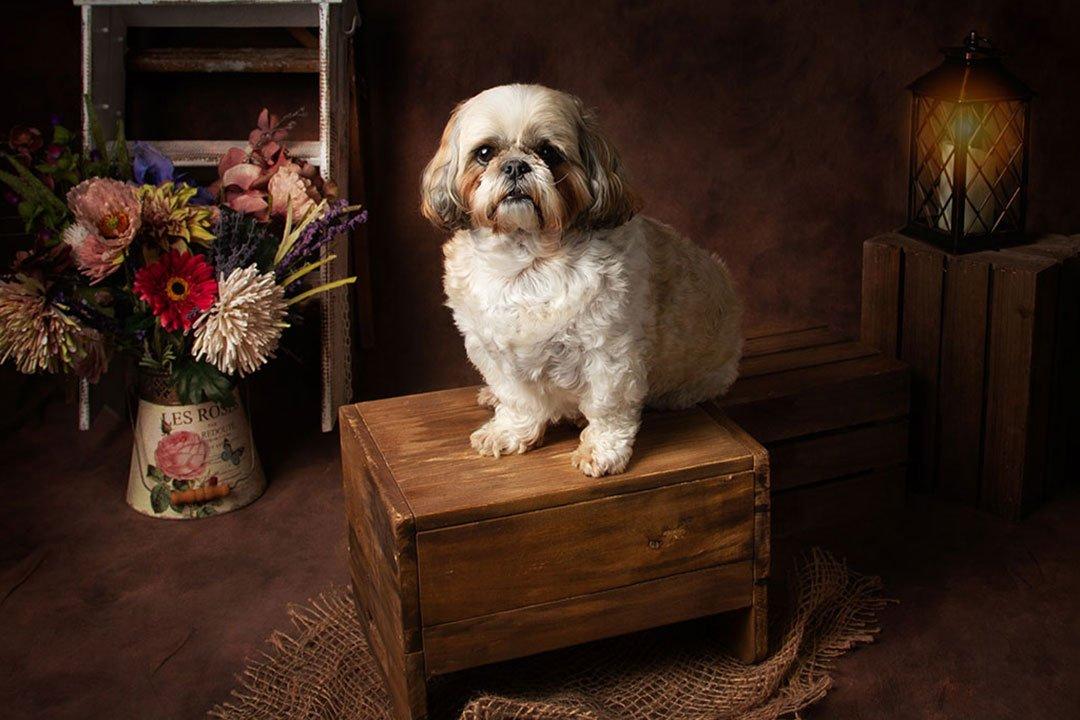 Pet photoshoot with pet dog by Newborn Photographer Leeds