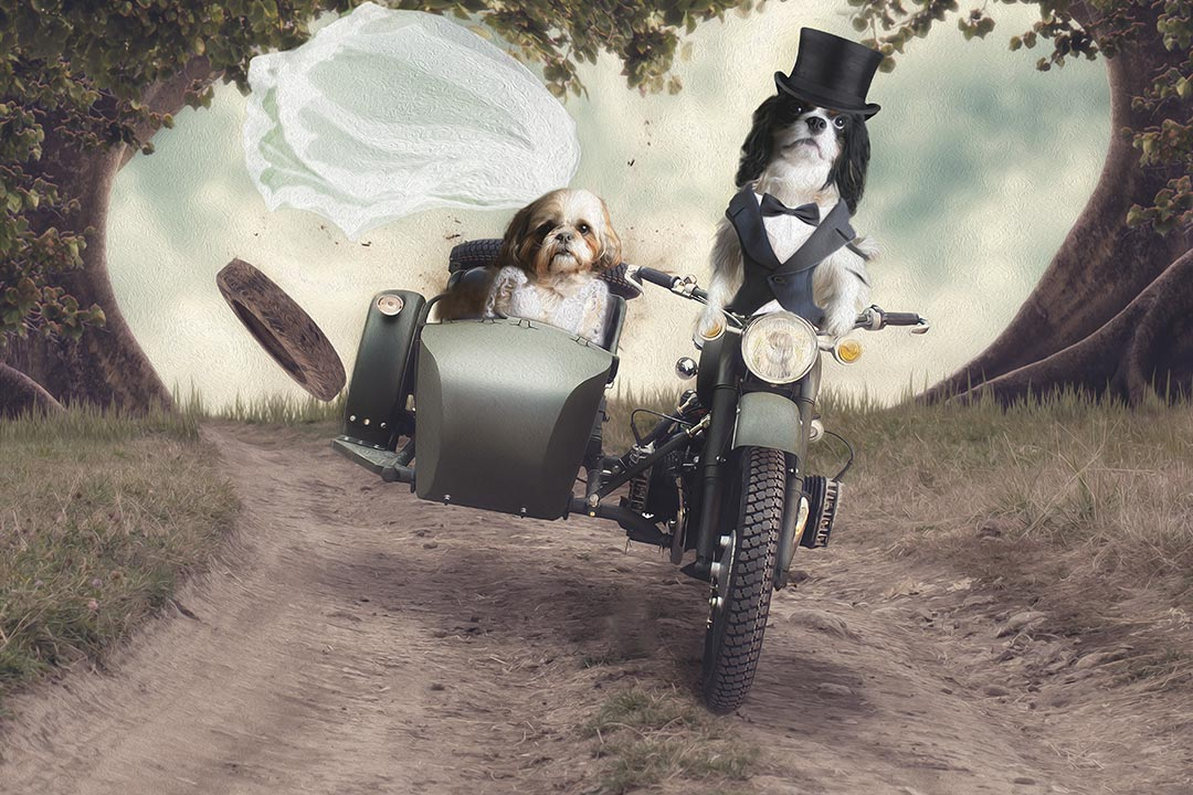 dogs on motorbike eloping in animal artwork Bradford
