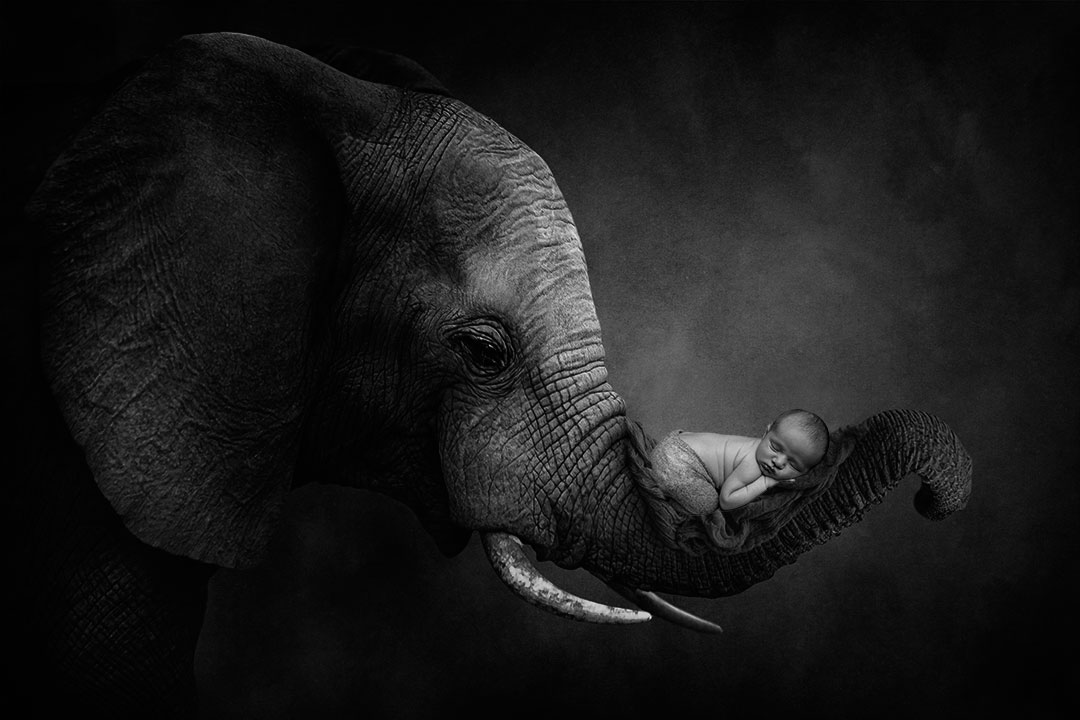 baby in elephant trunk